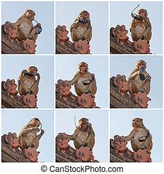 monkey holding sunglasses