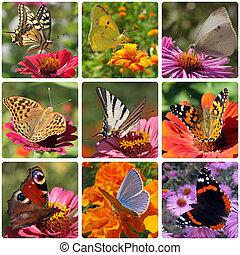 butterflies - collage with nine kinds of butterflies
