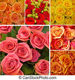 collage with roses