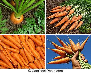 collage, zanahorias, orgánico