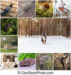 collage, zwierzęta