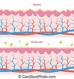 Collagen human skin effect. Close up damaged old and healthy...