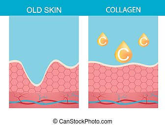 Collagen ,skin vector skin,  structure,  age,  aging,  beauty,  body,  dermatology,  epidermis