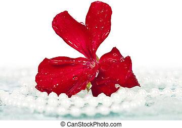 collana, perla, fiore
