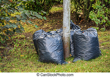 Collected and packed autumn leaves. Large full black plastic bags.