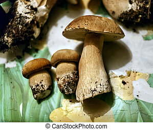 collected edible mushrooms lie on the table