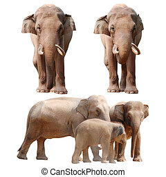 collection, éléphant