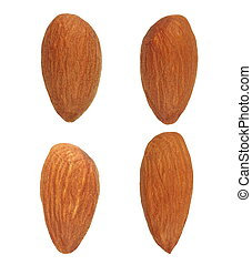 Collection Almond isolated on white