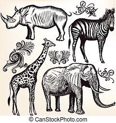 collection, animaux, savane, vecteur