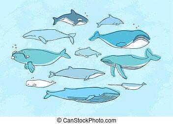 collection., ballena, garabato, mano, dibujado, set., ...