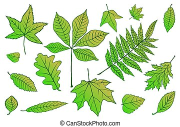 collection beautiful colorful set Autumn leaves of green on white. Vector illustration. EPS 10.