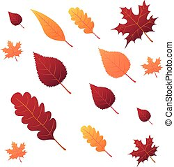 Collection beautiful colourful autumn leaves isolated on...