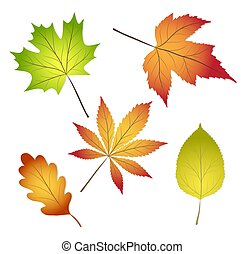 collection beautiful colourful autumn leaves isolated on white background, stock vector illustration
