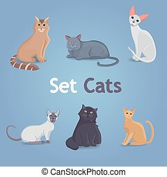 Collection Cats of Different Breeds.