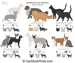collection, chat, espèces, style, hybrides, set., white., ...