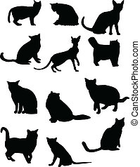 collection, chat
