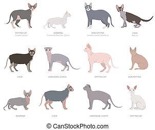 collection, chats, chat, chauve, espèces, style, hybrides, ...