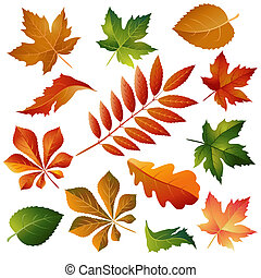 Collection colorful autumn leaves