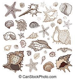 collection., conchas de mar