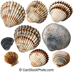 collection, coquilles