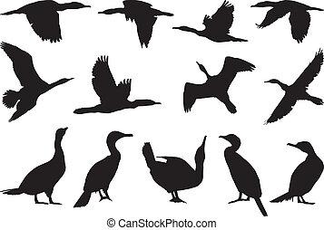 Collection cormorant