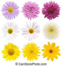 collection, de, fleurs