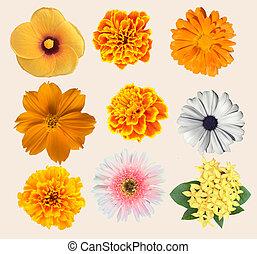 collection, divers, fleurs