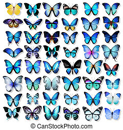 Collection of different bright butterflies