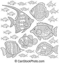 collection., fish, coloritura, pagina
