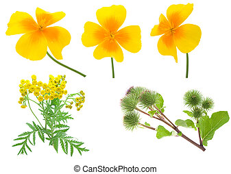 Collection flowers isolated on a white background.