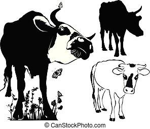 collection, fond blanc, isolé, vache
