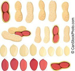 collection fresh peanuts on white background for your design