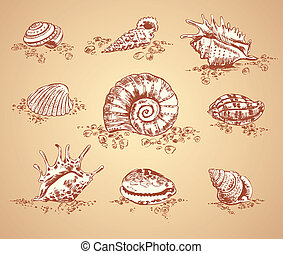 Collection graphic images seashell, vector set