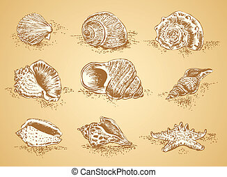 Collection graphic images seashell