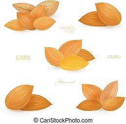 collection groups of almonds for your design