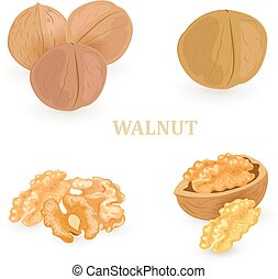 collection groups of walnuts for your design