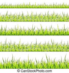 collection., illustratie, achtergrond., vector, witte , gras, grens