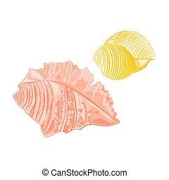 Collection marine seashells vector