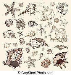 collection., meeresmuscheln
