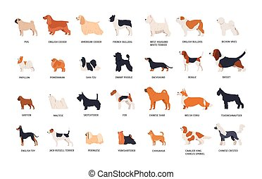 Collection of adorable dogs of various breeds isolated on...