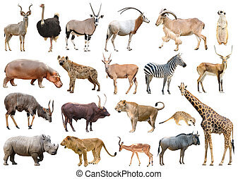 collection of africa animal isolated