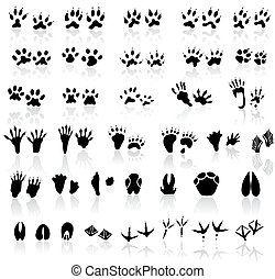 Collection of animal and bird trail