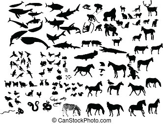 Collection of animals silhouette - vector