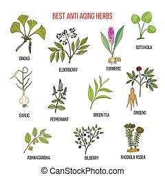 Collection of anti aging herbs