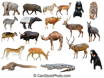 collection of asia animal isolated