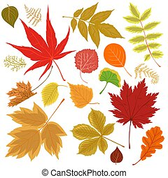 Collection of autumn leaves isolated on a white background. Vector graphics.