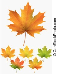 Collection of autumn maple leaves