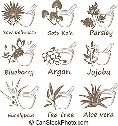 Collection of Ayurvedic Herbs.