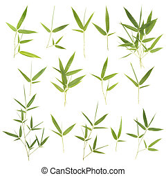 Collection of  bamboo leaves