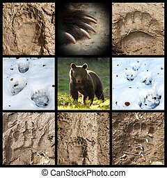 collection of bear tracks